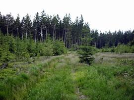 Správa lesů